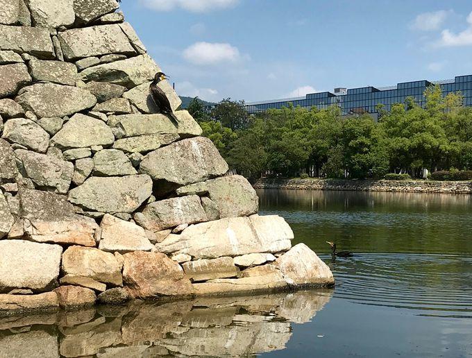広島城周辺に生息する生き物についても学べる!