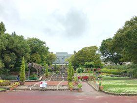 日本最大のバオバブも!「広島市植物公園」で巨大植物めぐり