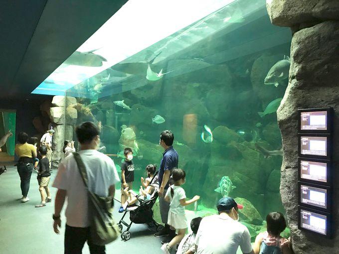 進化し続ける!開業50年を越える老舗水族館「宮島水族館」