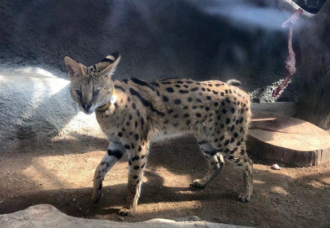 コロコロの世界最古のネコ、モデル並スラッと美人のネコも!