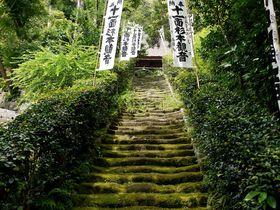 苔好き必見!苔の階段に目を奪われる!奈良時代建立の鎌倉最古の寺・杉本寺