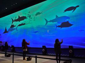 横浜で−20度を体験!Orbi yokohama(オービィ横浜)は世界の自然を体験できるミュージアム