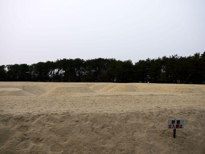 砂絵を近くで見てみよう!