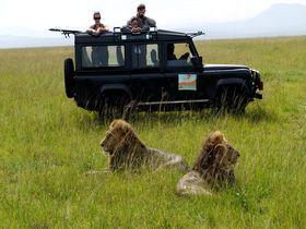 大自然に大感動!ケニア・マサイマラ国立保護区でサファリ!