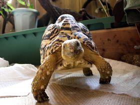 閲覧注意?!爬虫類に囲まれるカフェ「横浜亜熱帯茶館」