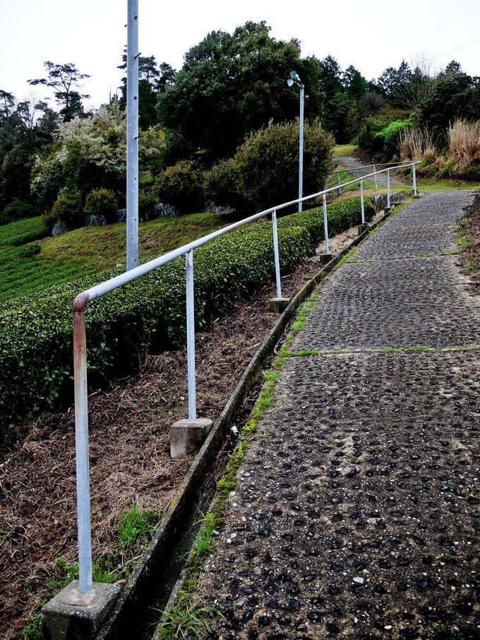茶畑にひっそりと佇む墓