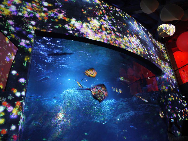 期間はクリスマスまで!新江ノ島水族館「ナイトワンダーアクアリウム2015」