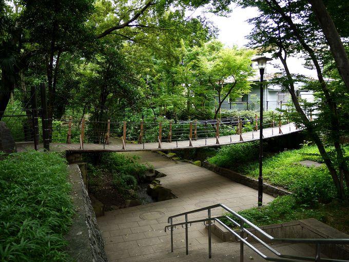 住宅地に本格的な吊り橋が?!音無さくら緑地の緑の吊り橋