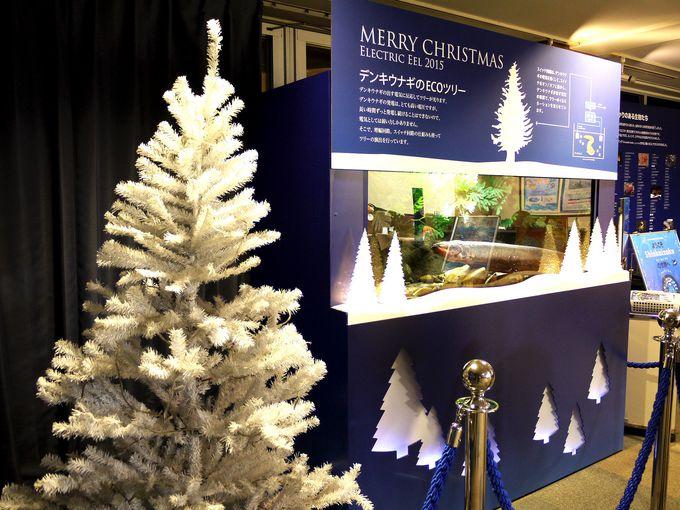 水族館ならではのクリスマス演出!光る瞬間を見られるか!?