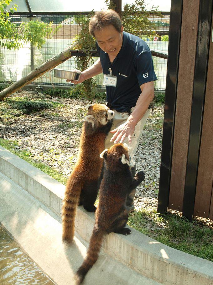 レッサーパンダが近い!「静岡市立日本平動物園」
