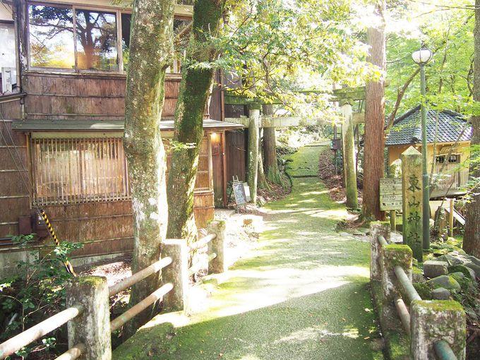 木々の中の静謐なカフェ「東山ボヌール」
