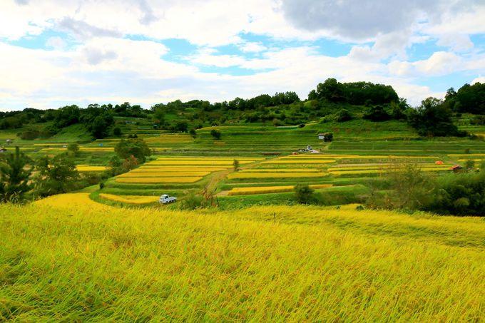 金色の棚田が美しい!「稲渕」(奈良)