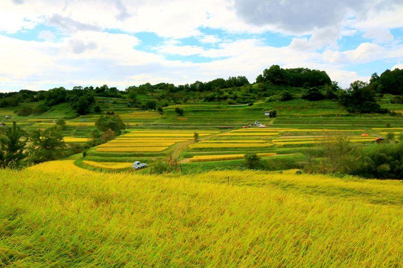 秋は金色の棚田が美しい!奈良・明日香の「稲渕」