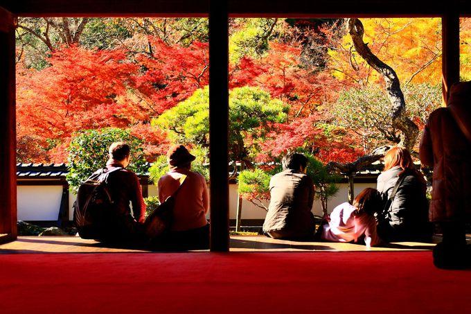 福寿院の縁側で楽しむ借景