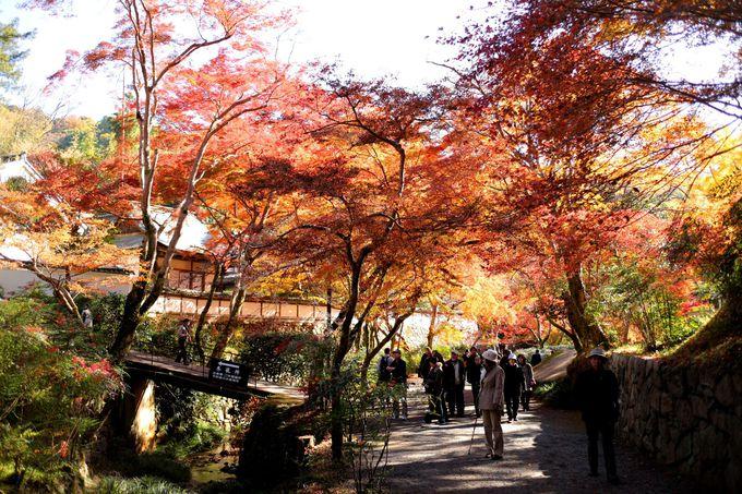 正暦寺は紅葉の時期が一番オススメ