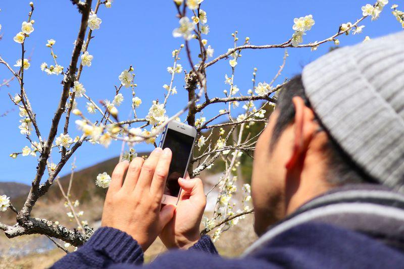 桜の前に!高知・土佐山「嫁石梅まつり」で花見