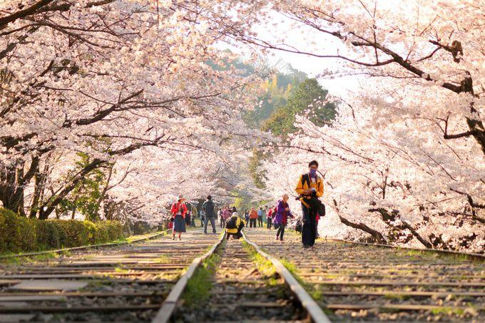 線路に入って写真が撮れる!?蹴上インクラインの桜