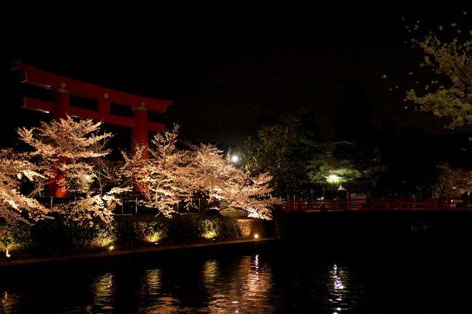 夜もオススメ!岡崎疏水の桜並木