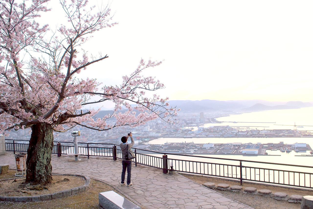 屋島山上から楽しむ絶景と桜