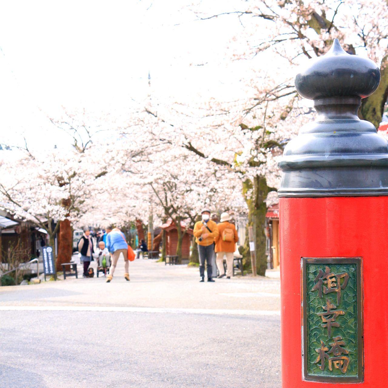"""桜の名所・新庄村""""がいせん桜"""""""