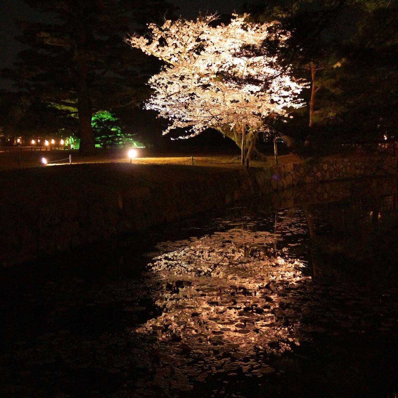 「春のライトアップ」イベントの見どころ