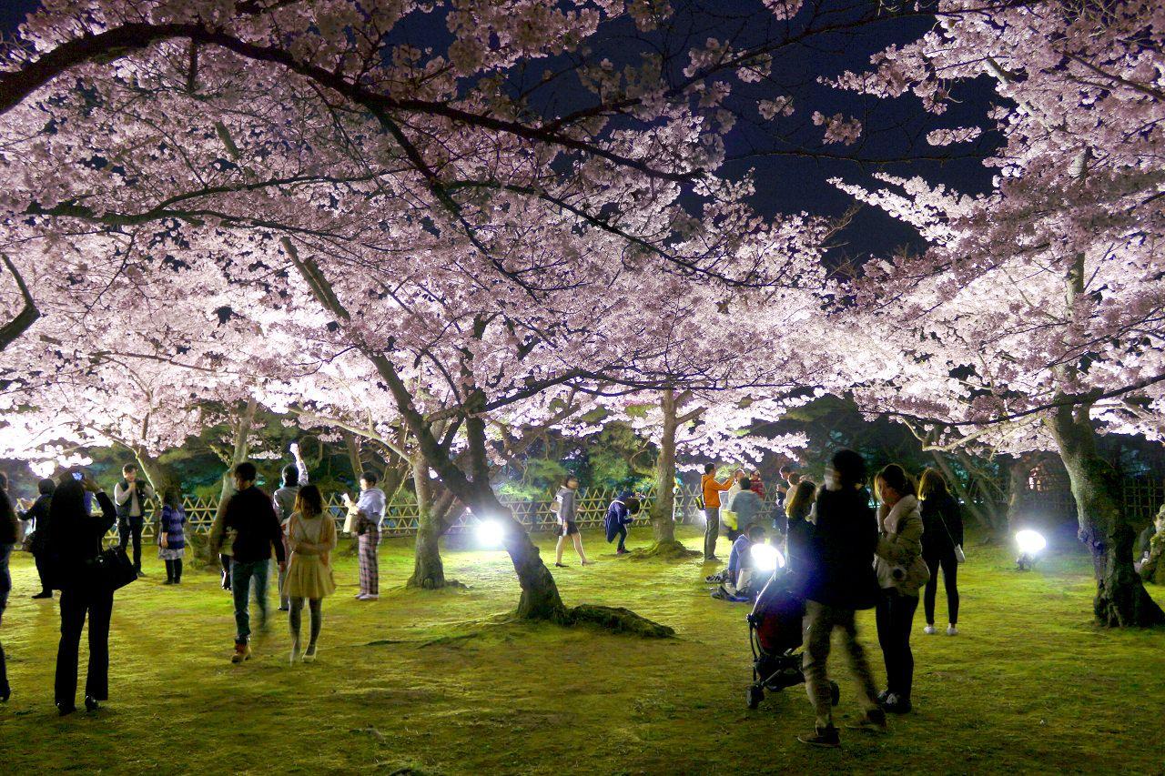 夜桜が素敵!高松「栗林公園」で楽しむ春のライトアップ