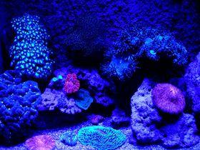 光るサンゴが見もの!「ニューカレドニア・ラグーン水族館」