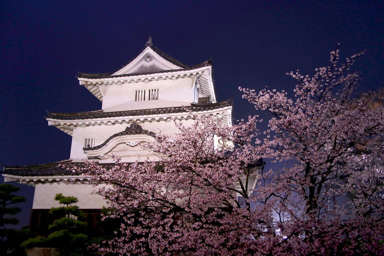 お城と桜が一度に楽しめる「丸亀城」