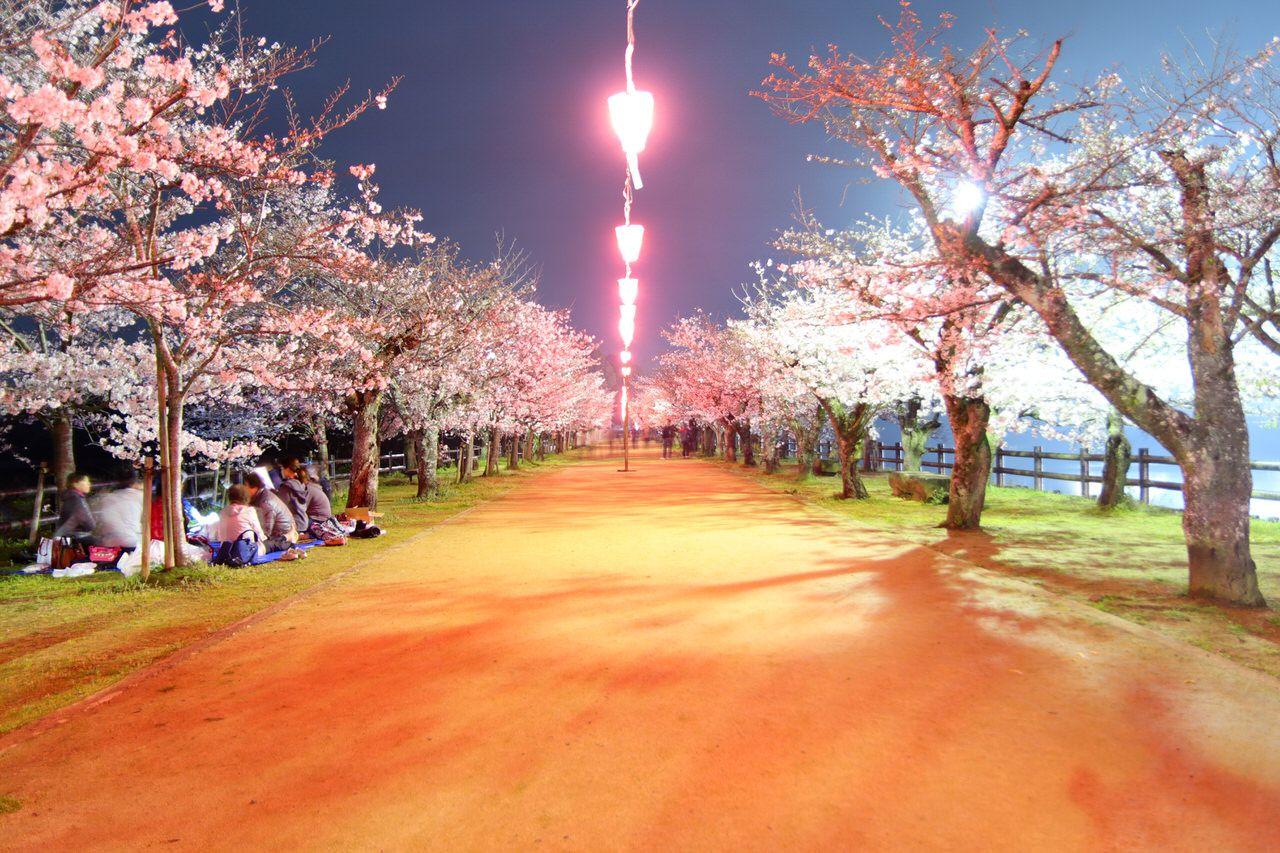夜の水面に映る桜並木が幻想的!「亀鶴公園」