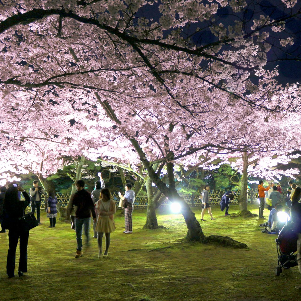 香川の定番観光地「栗林公園」の夜桜