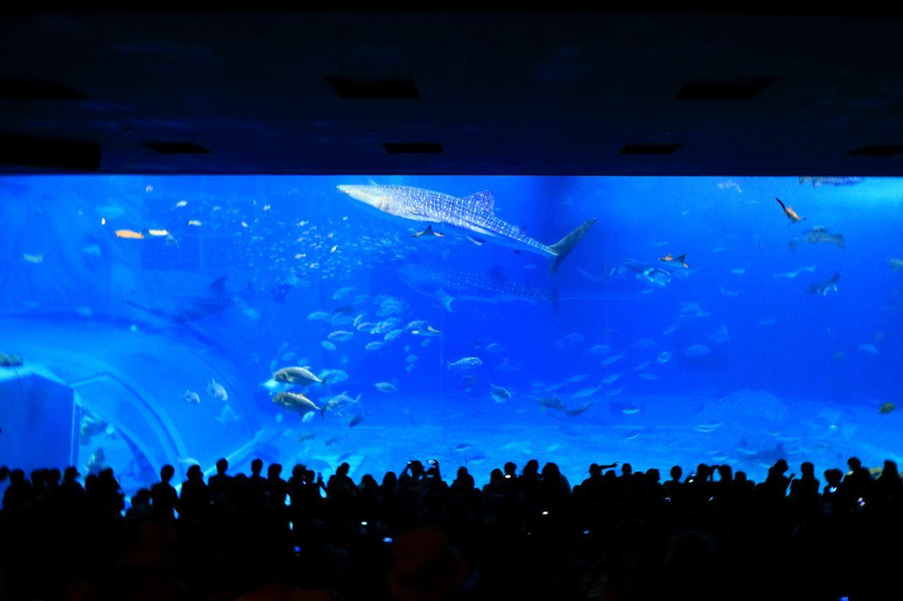 2日目前半:万座毛へ寄ってから美ら海水族館!