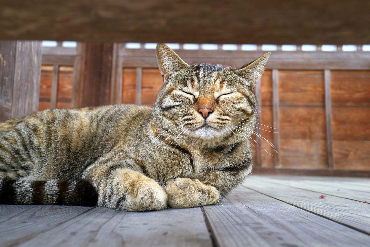 午後:猫に出会えるかも!尾道名物の路地を散策