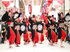 高知「よさこい祭り」で見るべきオススメ5チーム!