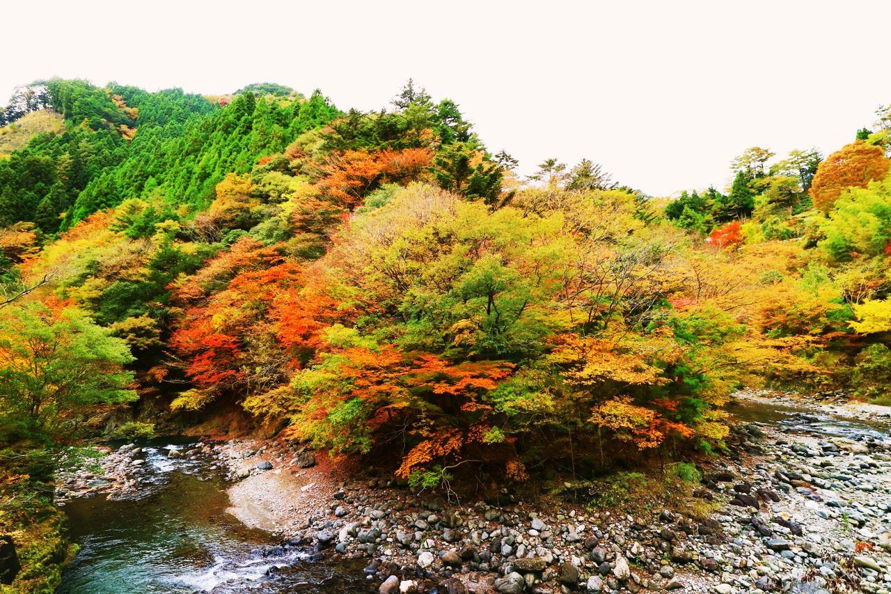 物部川と共に楽しむ紅葉