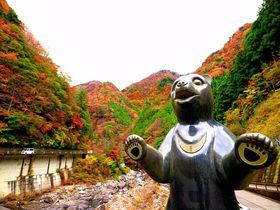 クマもビックリ!高知「べふ峡」の美しい紅葉