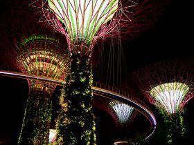 シンガポール「ガーデンズ・バイ・ザ・ベイ」は夜がオススメ!