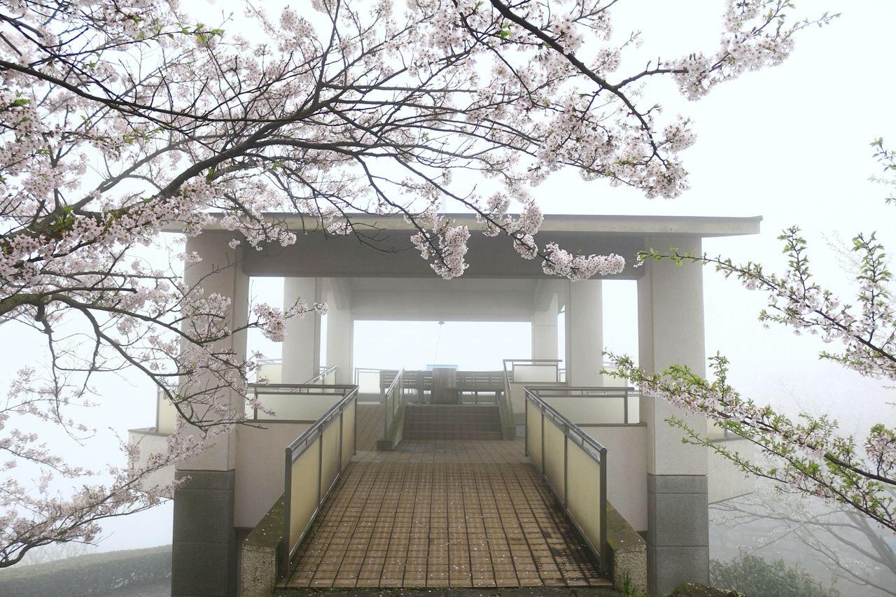 瀬戸内の島々と桜が楽しめる展望台