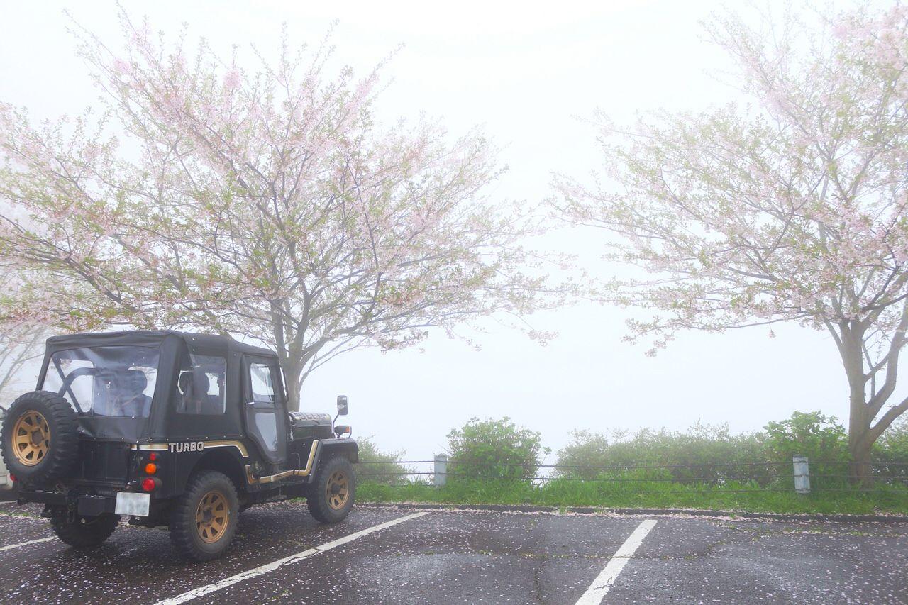 桜時期の紫雲出山へはシャトルバスで!