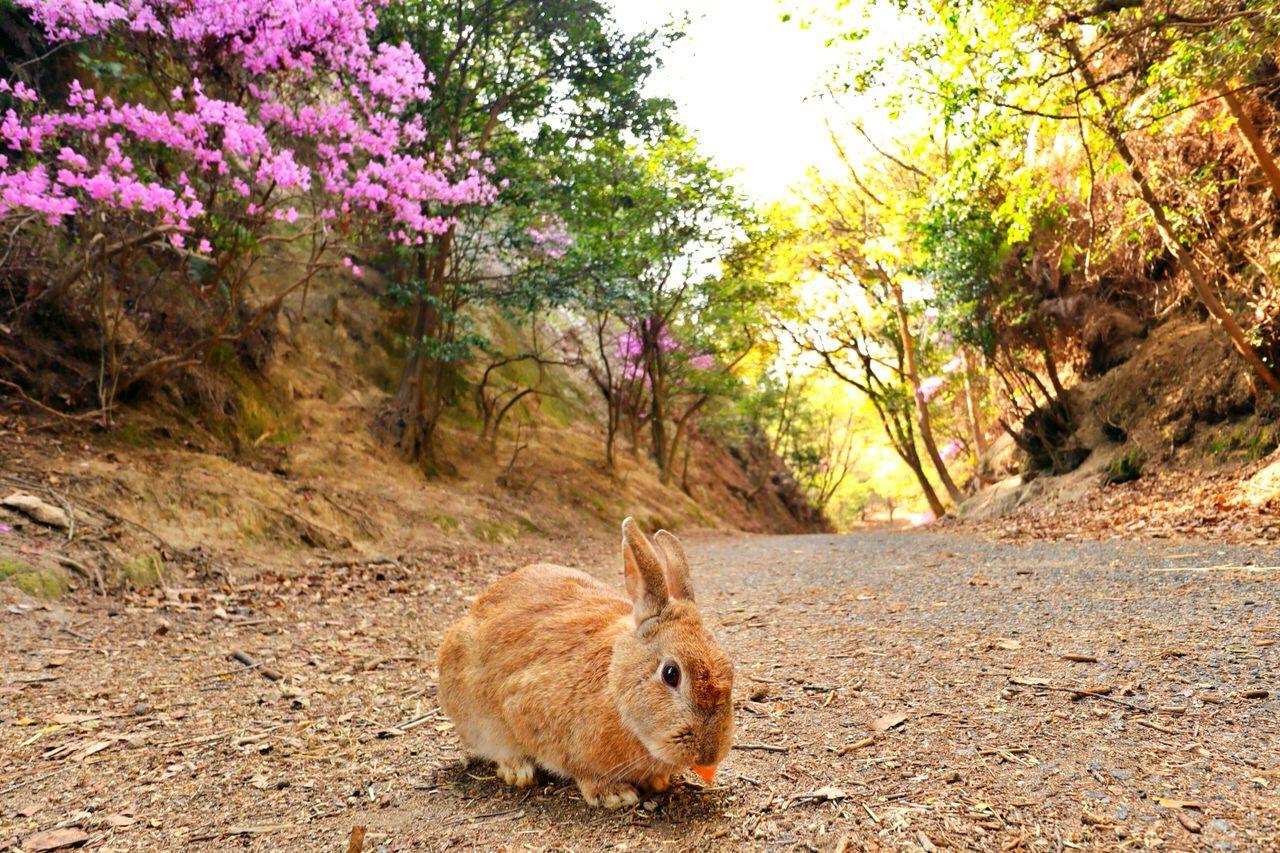 ウサギ島へフェリーでGO!