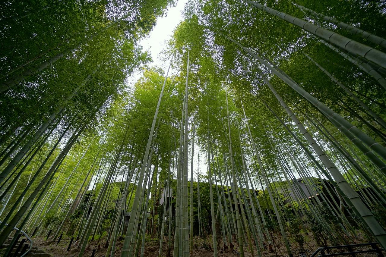 緑と灯りが作り出す印象的な景色