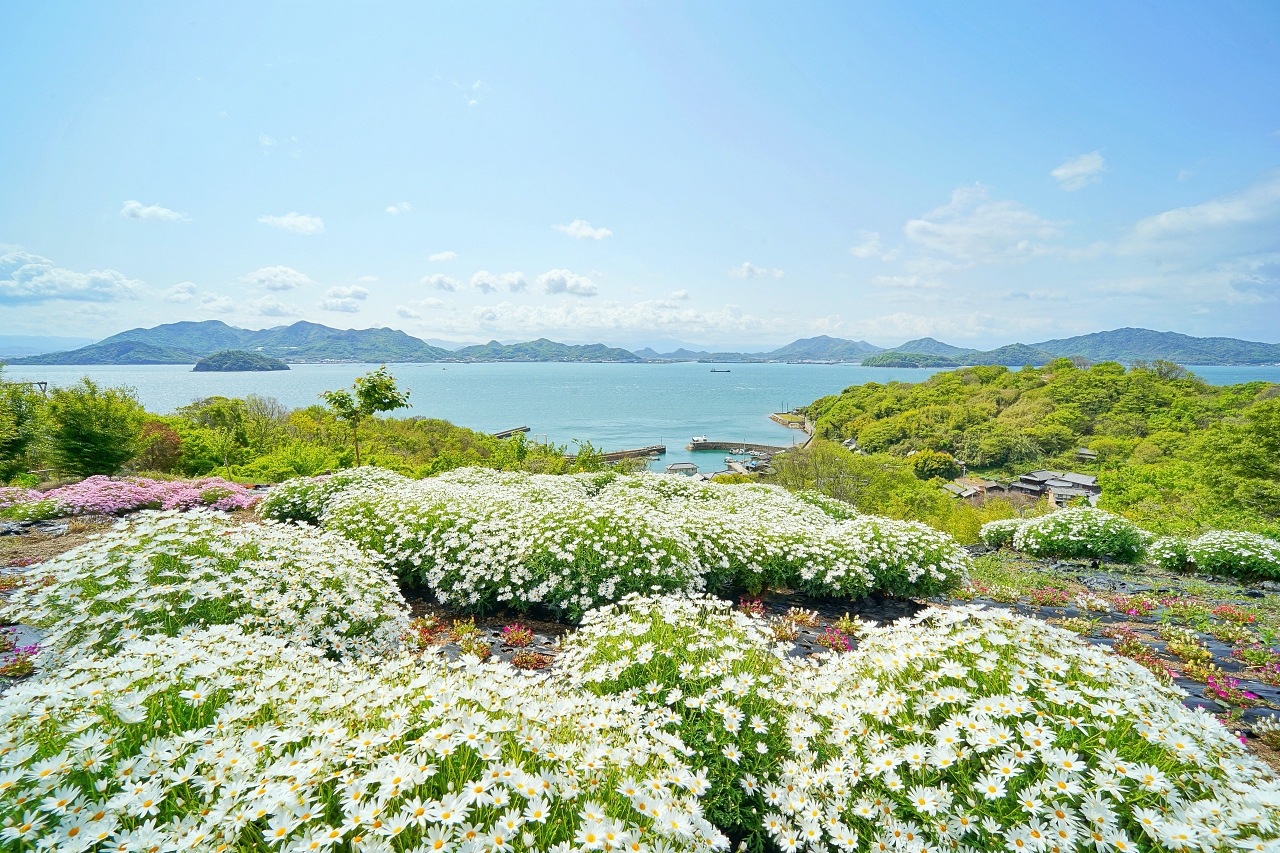 4〜6月限定!カラフルな「天空の花畑」