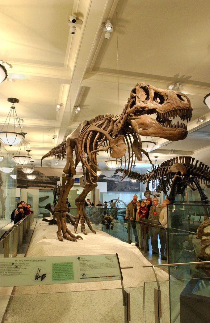 あのバトルの舞台「アメリカ自然史博物館」