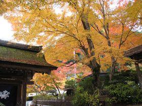 紅葉で彩られる国宝・湖南三山(滋賀県)めぐり!