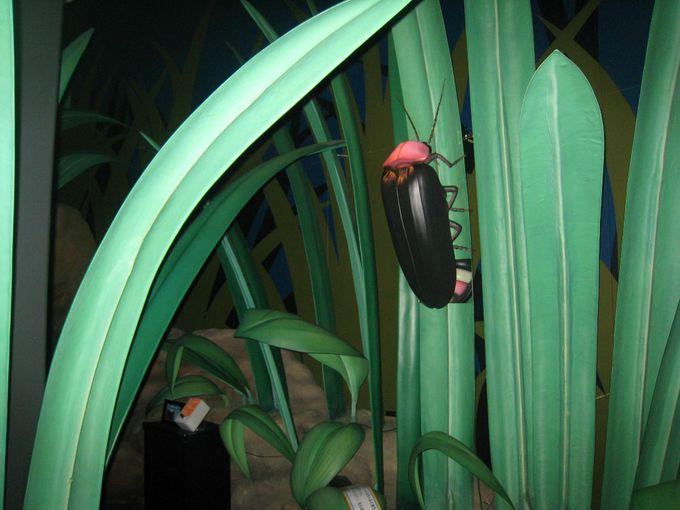 ミュージアムで楽しくホタルの生態を