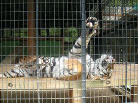 三重にある「大内山動物園」を親子で愉しもう!全国的にも珍しい保護動物の癒しの場