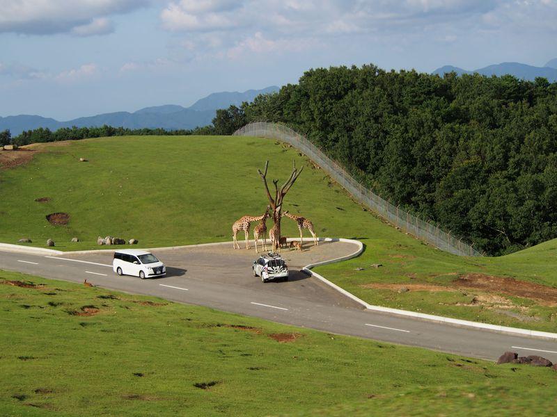 九州自然動物公園「アフリカンサファリ」で野生のスリルと感動を!