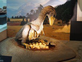 恐竜王国・福井で日本初公開!恐竜の胚化石「ベイビー・ルイ」