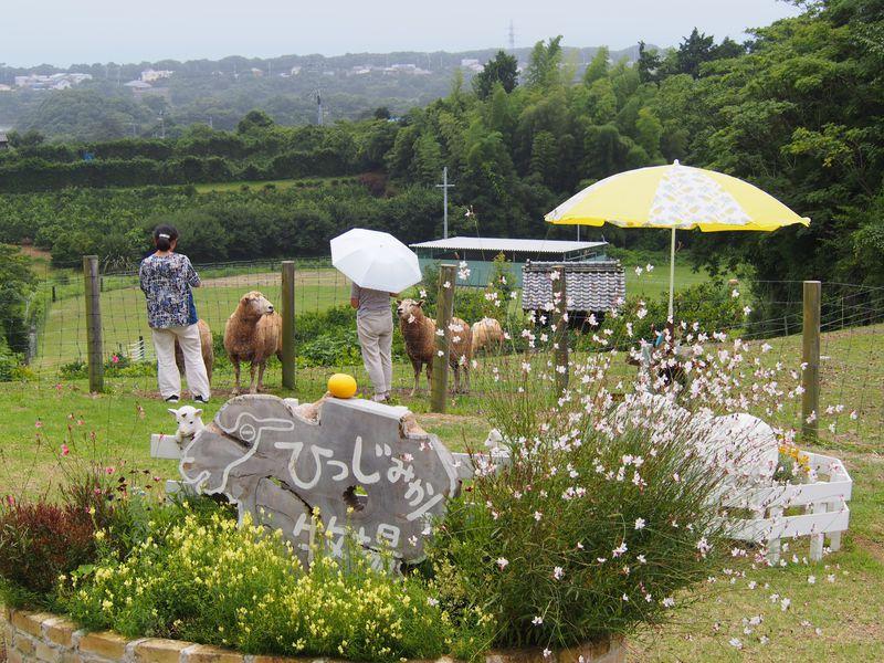 三重県御浜町の人気スポット「ひつじみかん牧場」でエサやり体験