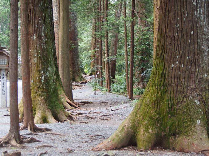 古の杉・檜に囲まれながら歩いて禊ぎを