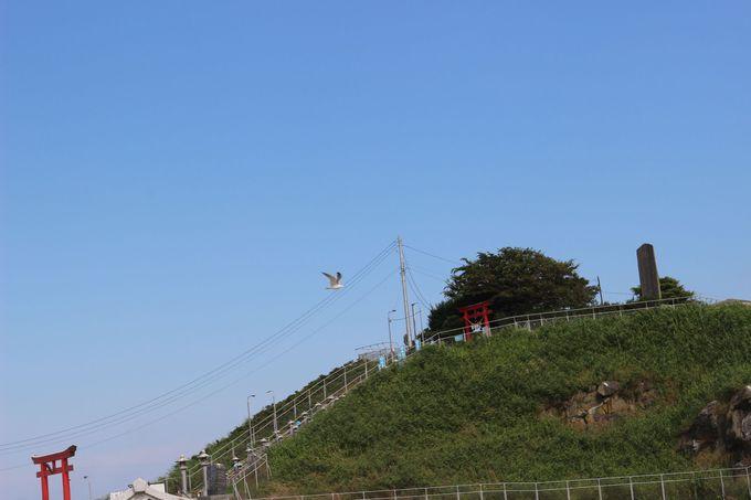 八戸港近くの蕪島には天から運(うん)が降り注ぐ